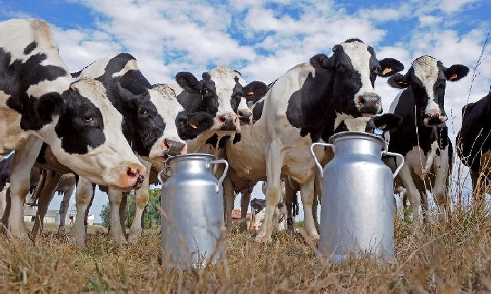 Süt Banka Milyarlarını Kaptırdılar