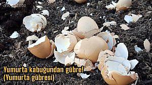 Yumurta kabuğundan gübre! (Yumurta gübresi)