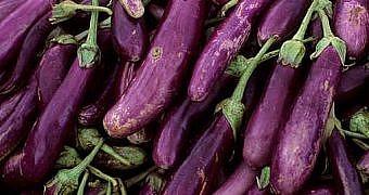 iranda-patlıcan-yağdı