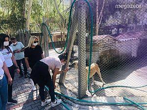 Sokak hayvanlarına mama yardımı yapıldı