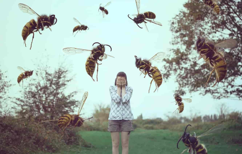 Entomofobi - En yaygın fobiler